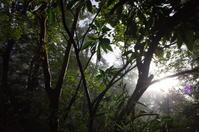 駆け足で巡る箱根 その1~仙石原すすき草原 - 「趣味はウォーキングでは無い」