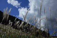 駆け足で巡る箱根 その2~仙石原すすき草原から箱根ラリック美術館へ - 「趣味はウォーキングでは無い」