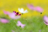 野秋のお花畑 ② - やきつべふぉと