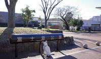Vol.1400 富士見公園 - 小太郎の白っぽい世界