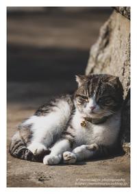 猫の首に鈴 - ♉ mototaurus photography