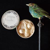 野鳥の卵の標本 - フランスアンティーク雑貨・家具のSibora BLOG