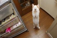 お願いおいなりちゃん - ぶつぶつ独り言2(うちの猫ら2018)