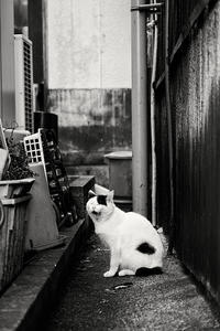 猫とあくび - 夢幻泡影