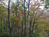 お山の紅葉とコガラ/ゴジュウカラ - トドの野鳥日記