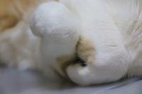 ニャンコの手 - ぎんネコ☆はうす