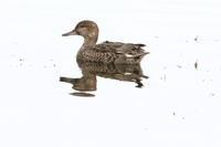 遊水地とウトナイ湖 - 今日の鳥さんⅡ