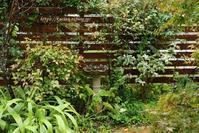 秋を感じる雨ホトトギス&深紅の実 - miyorinの秘密のお庭