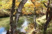 森の動脈 - 気ままに☆ひ撮り旅