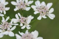 """ハーブやアロマを生活や仕事に活かしたい - 英国メディカルハーバリスト&アロマセラピストのブログ""""Herbal Healing 別館"""""""