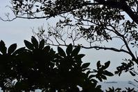 海辺はグレイなWednesday観音崎の風景 - 素顔のままで