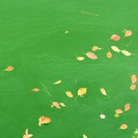 次のサイクルへ移行。プレミアな野草ウォッチング by 皇居のお堀周辺6 - poem  art. ***ココロの景色***