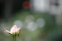 今日の旧古河庭園はぼちぼち。カメラ突然、臨終です。 - みるはな写真くらぶ