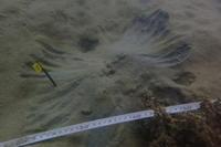 18.10.11シャコの仲間も - 沖縄本島 島んちゅガイドの『ダイビング日誌』