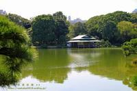 江戸東京九庭園の清澄庭園に出かけてみました(*^_^*) - 自然のキャンバス