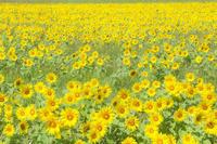 野秋のお花畑 ① - やきつべふぉと