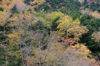 「上高地秋色」 - 風景写真 山岳写真  日々のスナップ などなど…