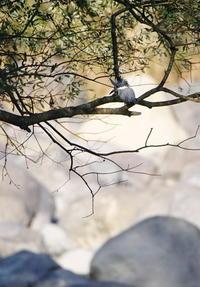 空気感の感じられる朝・・・爽やか・の~んびりした河川敷きでした。 - 気ままな撮影散歩