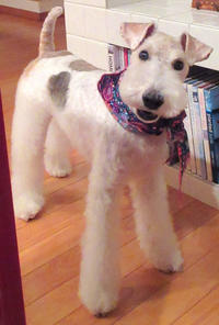 最高の笑顔の愛犬 - フェルタート(R)・オフフープ(R)立体刺繍作家PieniSieniのブログ