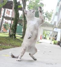ご近所猫 2018.10.06 - Rayblade Photos