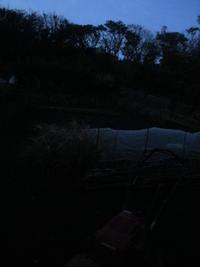 まだ暗いよ^^; - 畑へ行こう♪