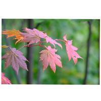 北海道の秋 - カエルのバヴァルダージュな時間