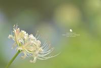 ぽんぽんぽん - お花びより