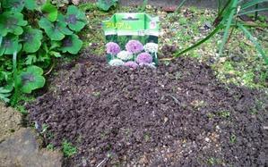 庭に残っている僅かの草花と球根の植え付け -