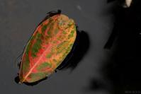 Lonely Leaf - フォトな日々