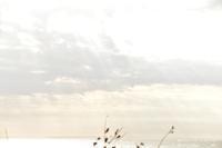 砂の山 - 好きな「こと」「もの」メモ