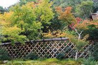 京都光悦寺初紅葉 - 暮らしを紡ぐ
