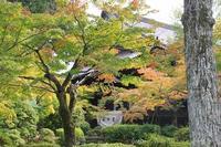 京都真如堂真正極楽寺初紅葉 - 暮らしを紡ぐ