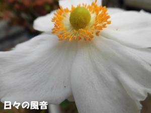 時代の象徴77(戦後最強のアイドル西城秀樹) -