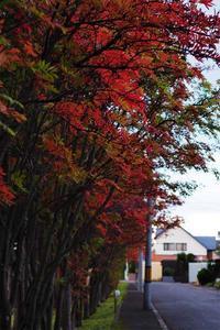 10月11日今日の写真 - ainosatoブログ02