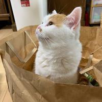 猫の気持ち - 土筆の庭