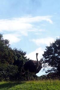秋の草原ゾーン - 動物園放浪記