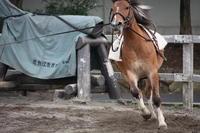 力強い走りでキメル! - 一場の写真 / 足立区リフォーム館・頑張る会社ブログ