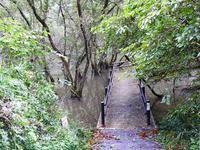 ミゾソバにホバァリング - 千葉県いすみ環境と文化のさとセンター