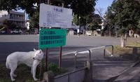 Vol.1401 中島公園 - 小太郎の白っぽい世界