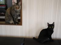 猫のお留守番 天ちゃん麦くん茶くん〇くん編。 - ゆきねこ猫家族