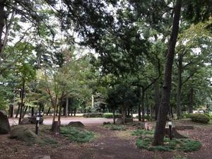 淵野辺公園を歩く - 散歩ガイド