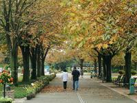 秋色に染まるわんわく公園1 - 光の音色を聞きながら Ⅳ
