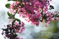 生まれる - Poetry Garden 詩庭