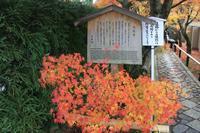 京都の紅葉光悦寺 - 浜千鳥写真館