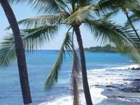 ハワイ島へ②cafeからコンドミニアム('ω') - ほっこりしましょ。。