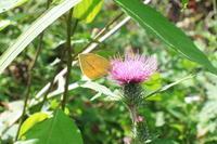 秋晴れの午後に - 蝶の縁