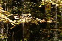 森林浴 - むーちゃんパパのブログ4