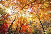 風は秋色 - 無題