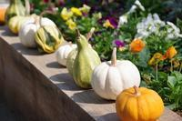 秋薔薇を見に~とちぎ花センターへ - 季節の風を追いかけて
