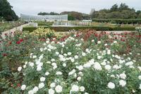 神代植物公園の10月〜引き気味でバラ - 柳に雪折れなし!Ⅱ
